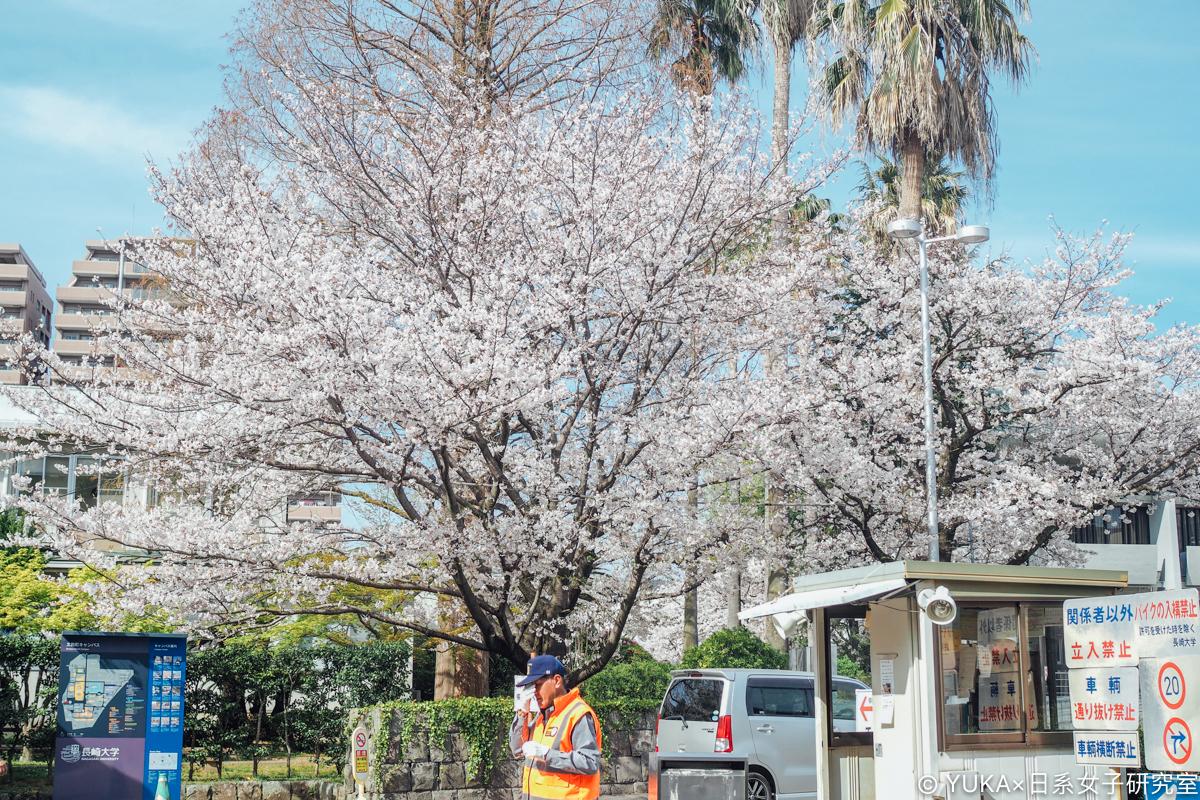 長崎大學櫻花