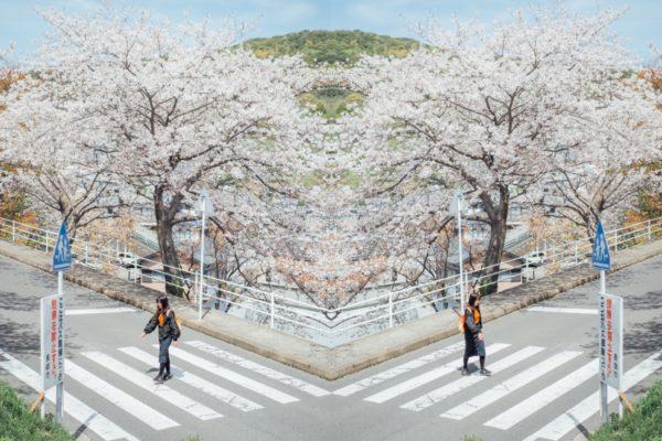 【長崎】2020九州賞櫻推薦:長崎櫻花景點立山公園(含長崎櫻花私房景點推薦)