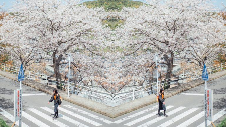 長崎立山公園賞櫻