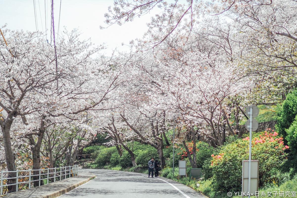 長崎立山公園櫻花隧道
