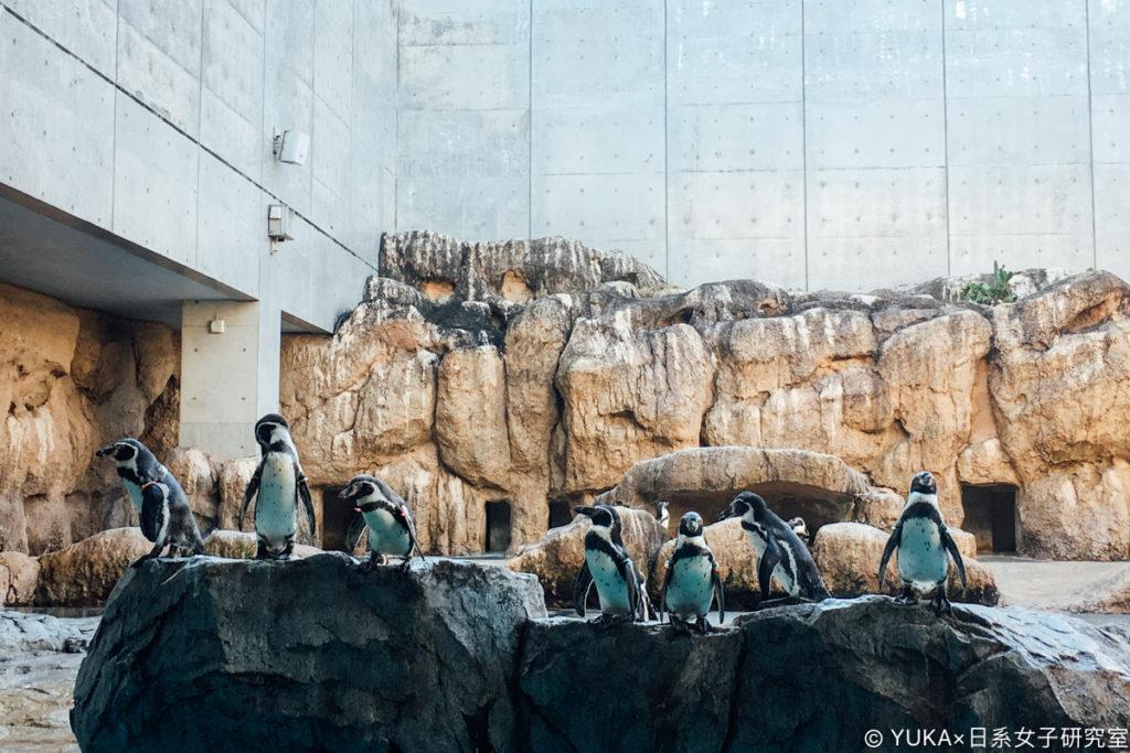 長崎企鵝水族館-漢波德企鵝