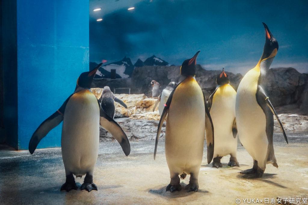 長崎企鵝水族館-國王企鵝