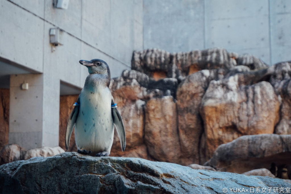 長崎企鵝水族館-企鵝