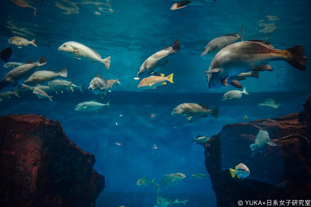 長崎企鵝水族館-魚